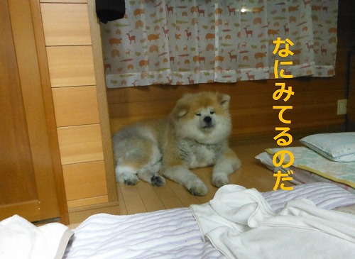 s-201107-5.jpg