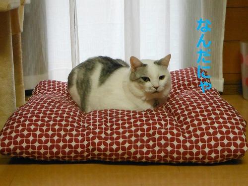 s-201123-1.jpg