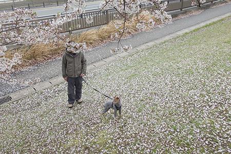 2021ジル子と桜7