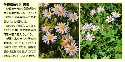 季節通信83野菊