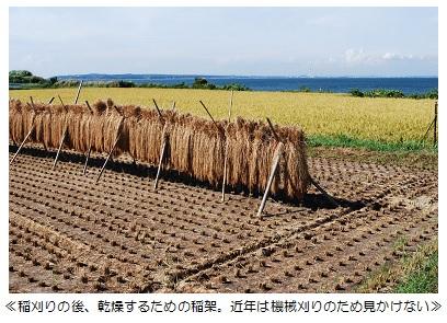 稲のハザG