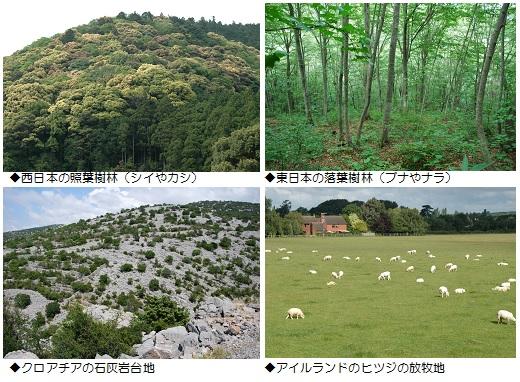 森林の文化史G