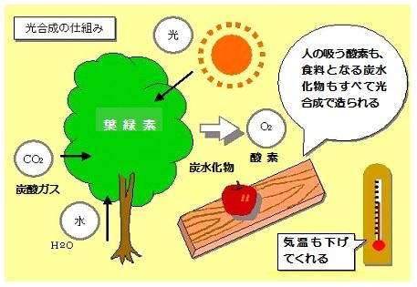 太陽の恩恵G