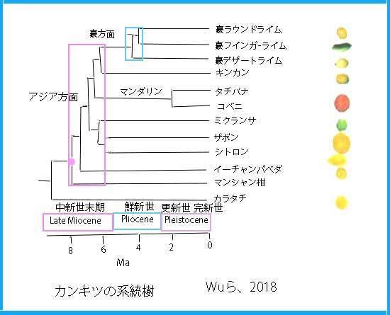 keihusinWu系統樹SNS