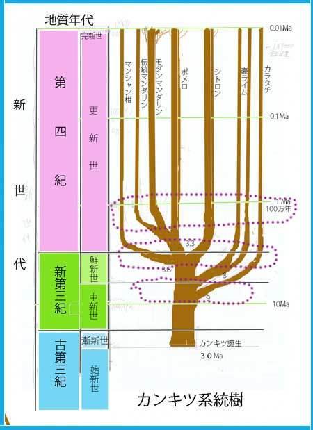 keihusin新系統樹