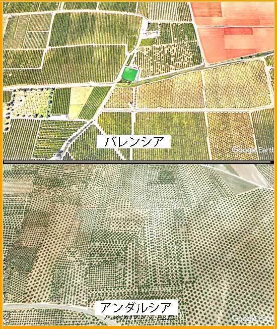 spain畑の比較