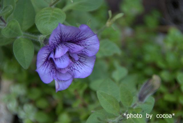 DSC_0085 2011-10-12 16-15-07