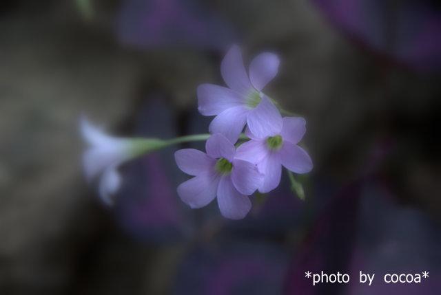 DSC_0075 2011-10-12 16-10-39