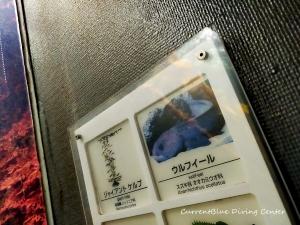 葛西臨海水族園潜水作業 (2)