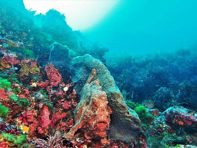 210221伊豆海洋公園ダイビング (59)
