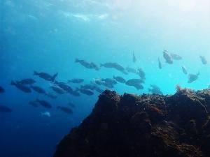 210221伊豆海洋公園ダイビング (48)