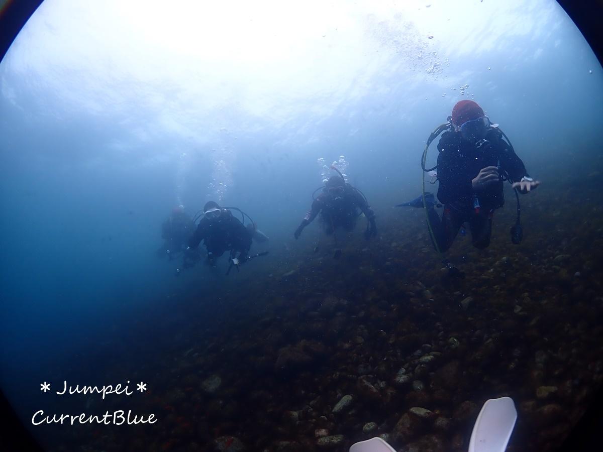 大瀬崎岬の先端サンゴ,ソフトコーラル (2)