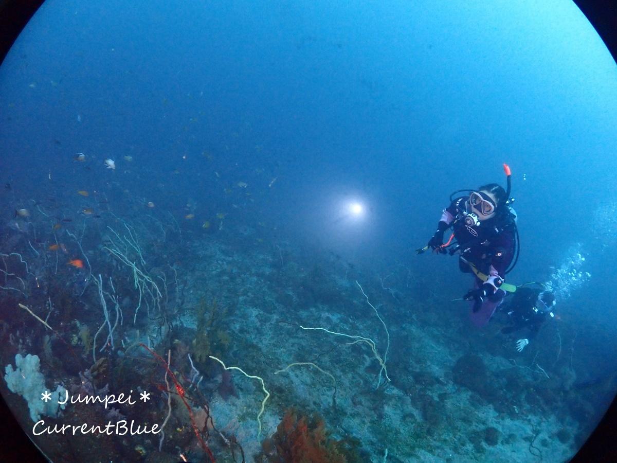 大瀬崎岬の先端サンゴ,ソフトコーラル (6)