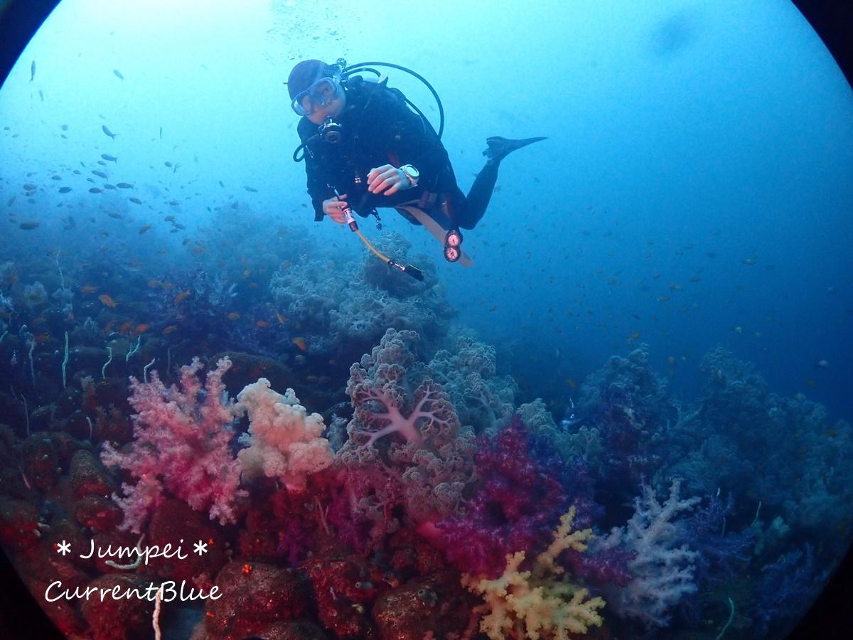 大瀬崎岬の先端サンゴ,ソフトコーラル (10)
