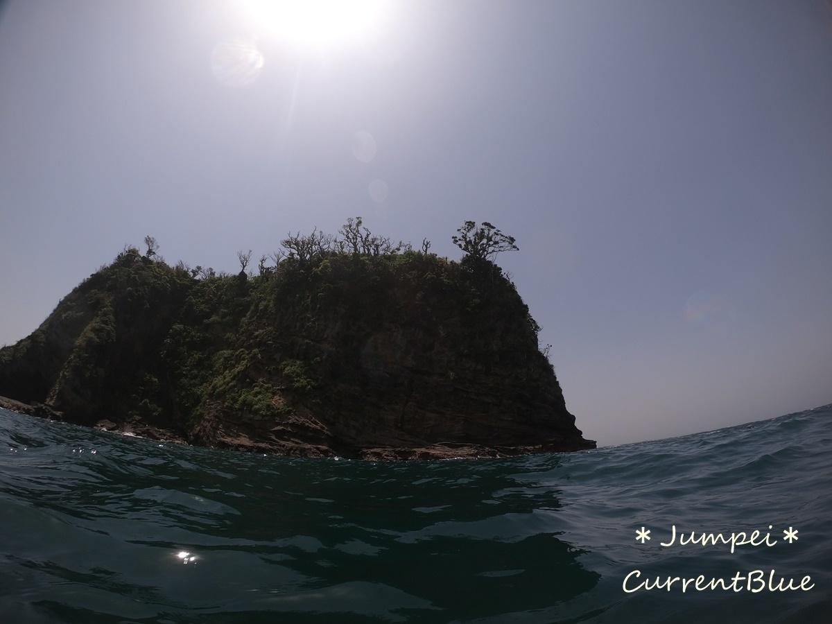 勝山ダイビングかっちゃまダイビング千葉ダイビング (3)
