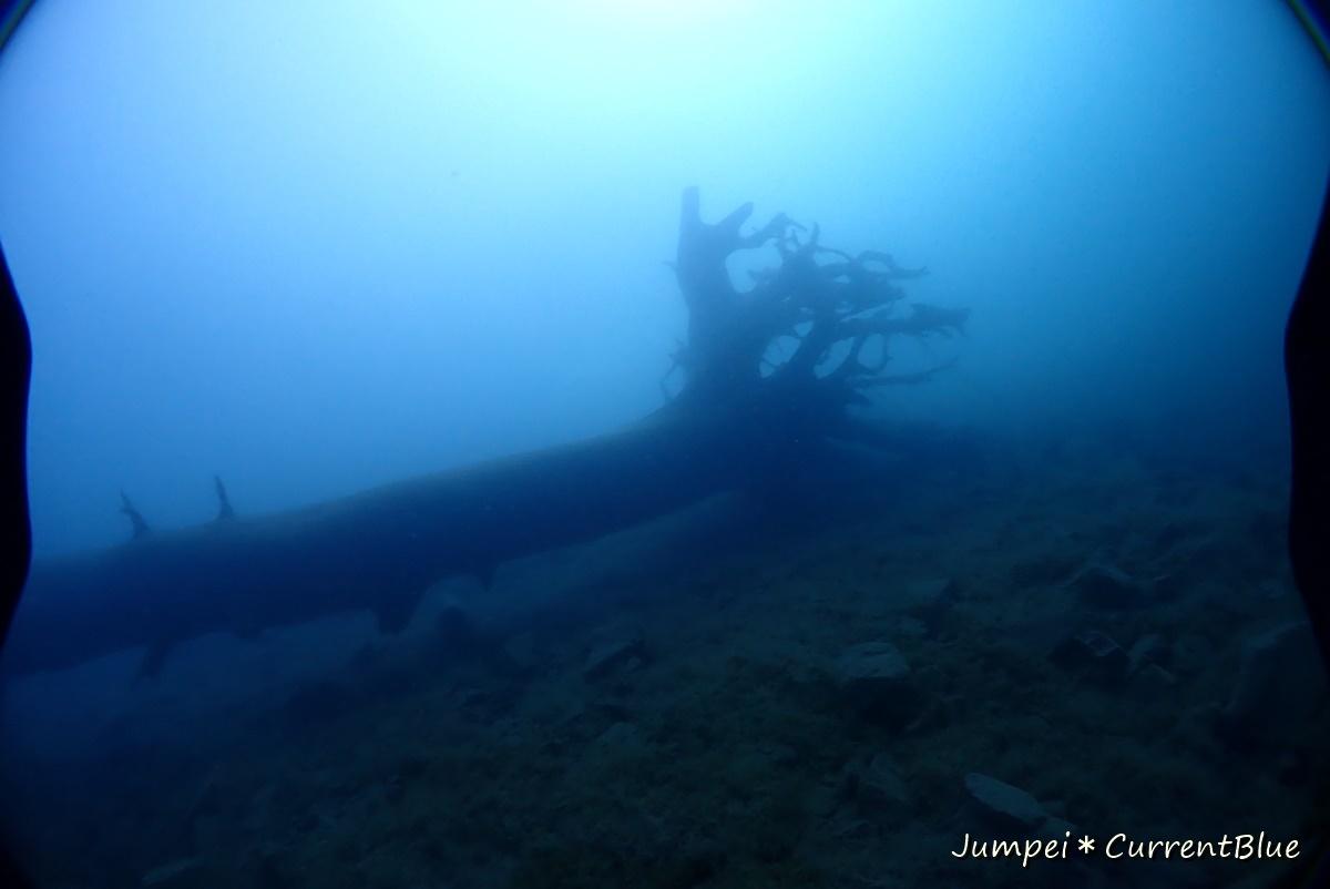 2本栖湖ダイビング (27)