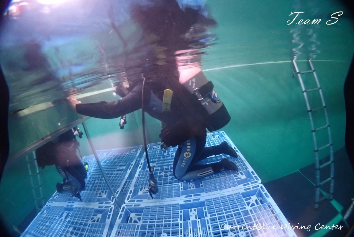 体験ダイビングプール (4)