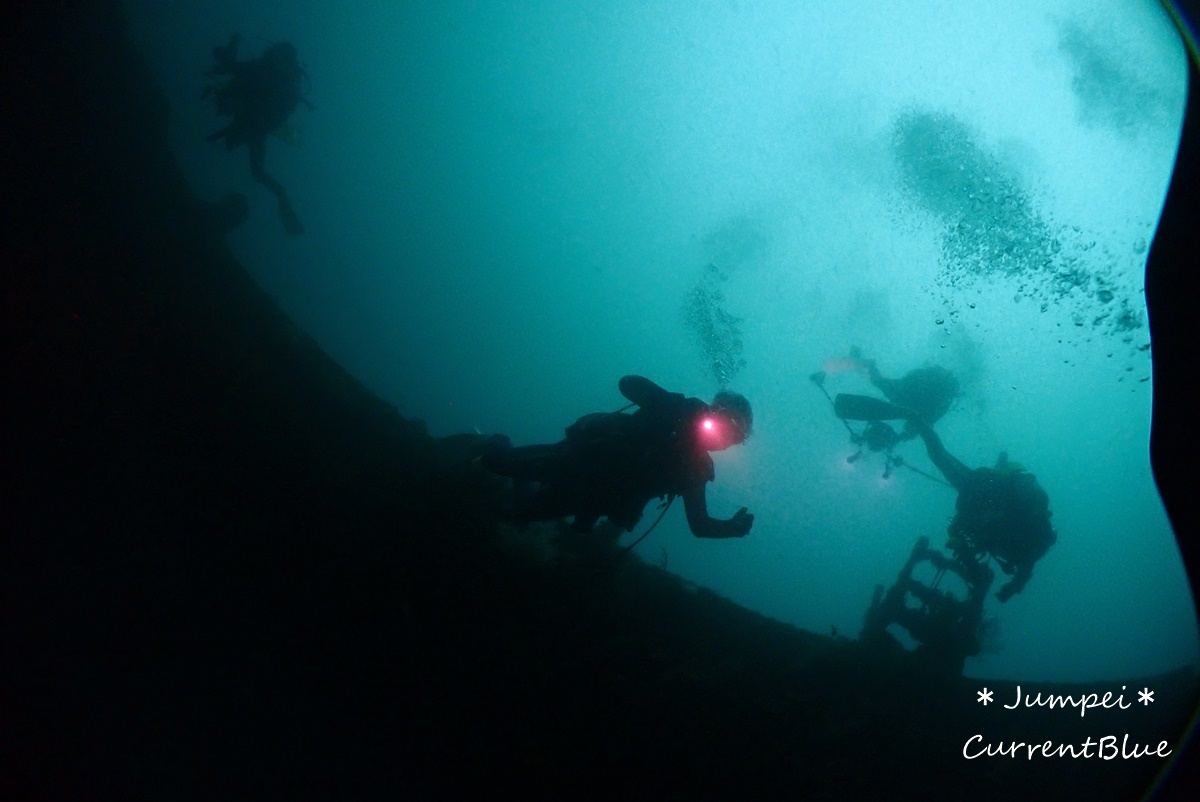 熱海ダイビングおすすめソフトコーラル美しいサクラダイ (12)