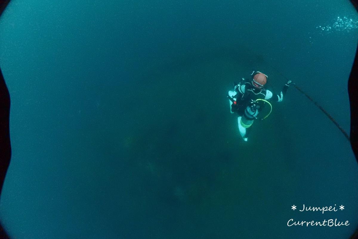 熱海ダイビングおすすめソフトコーラル美しいサクラダイ (5)