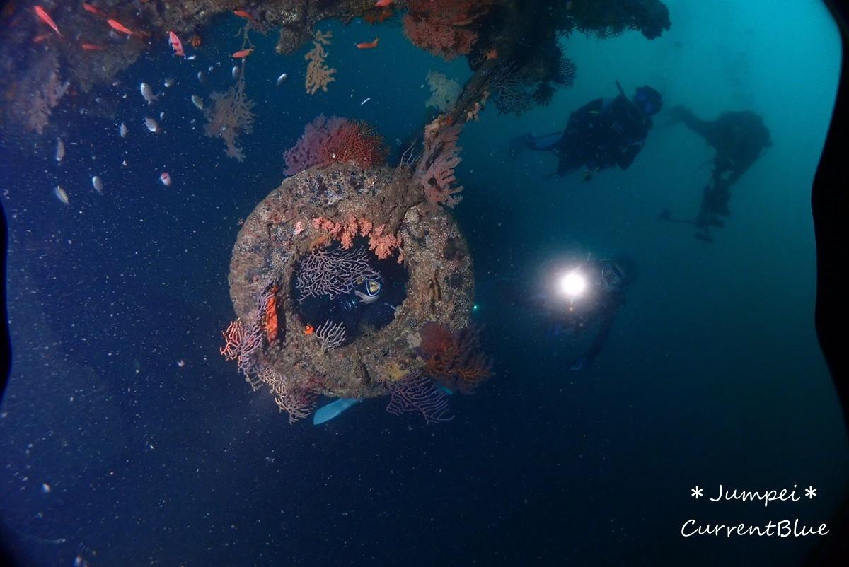 熱海ダイビングおすすめソフトコーラル美しいサクラダイ (21)