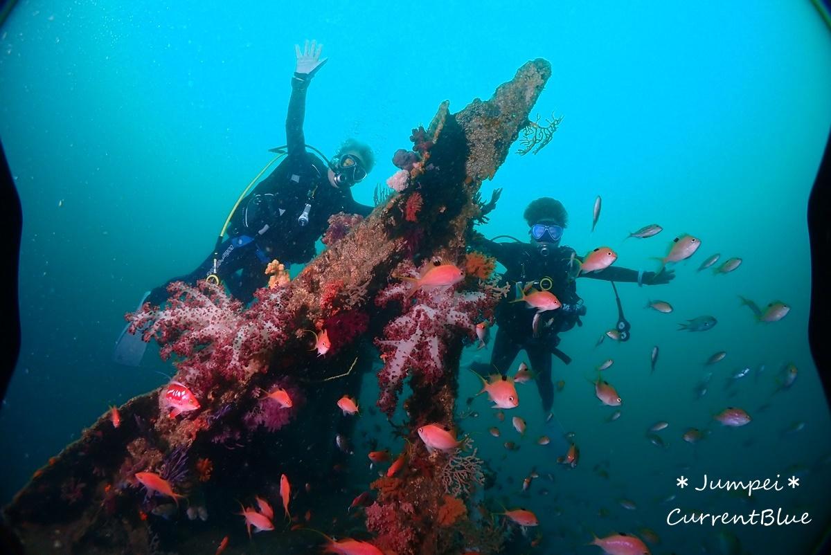 熱海ダイビングおすすめソフトコーラル美しいサクラダイ (38)