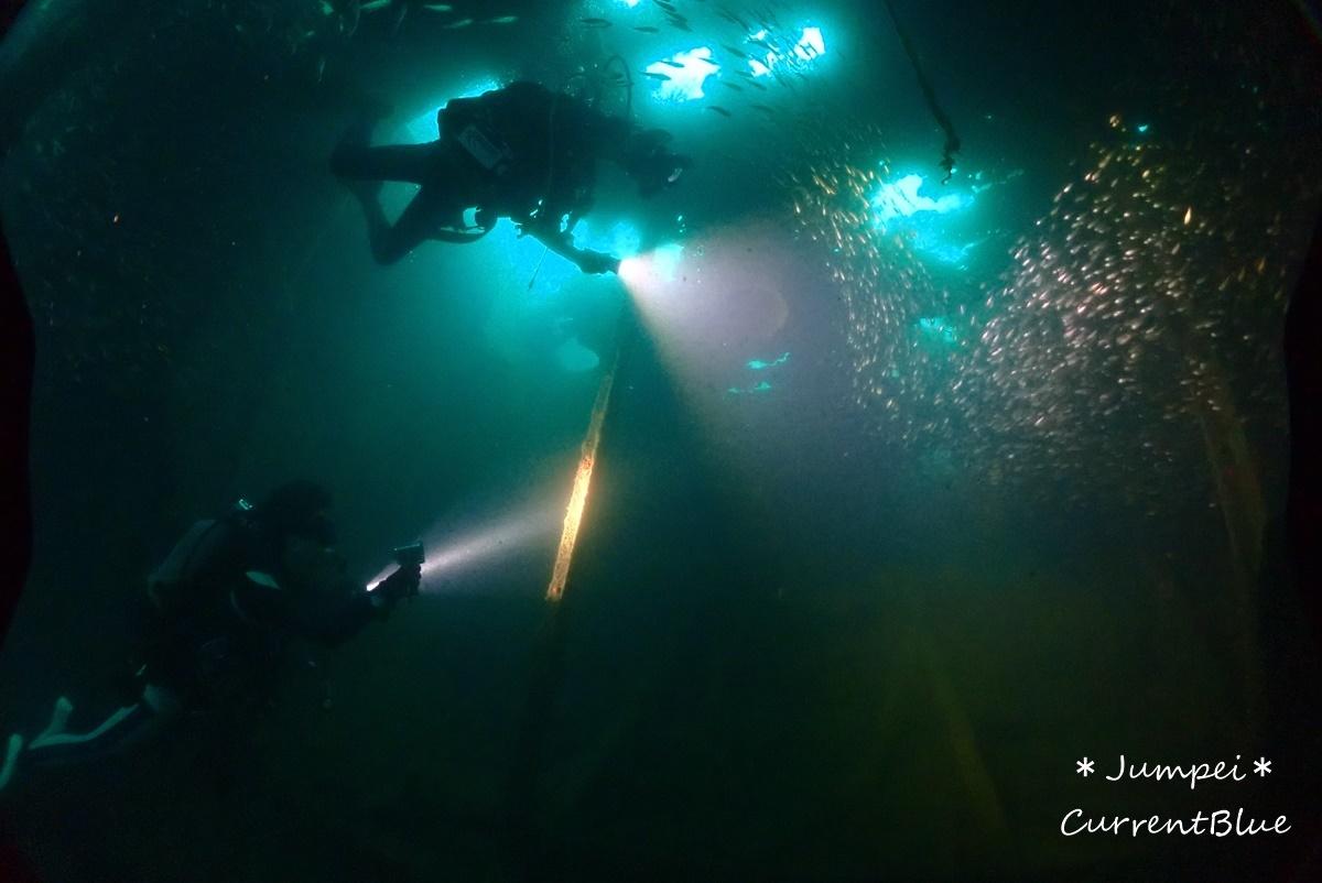 熱海ダイビングおすすめソフトコーラル美しいサクラダイ (33)