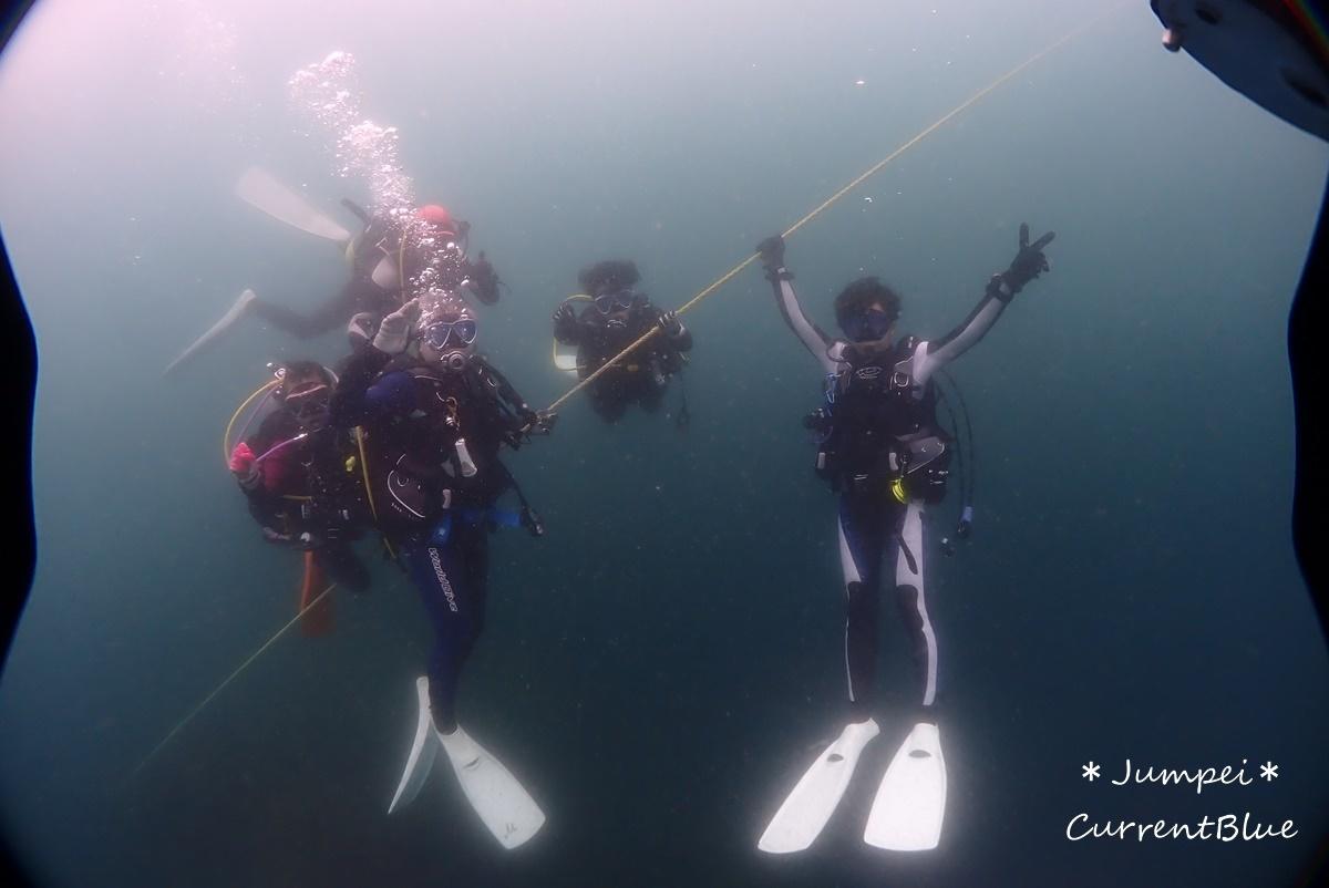 熱海ダイビングおすすめソフトコーラル美しいサクラダイ (62)