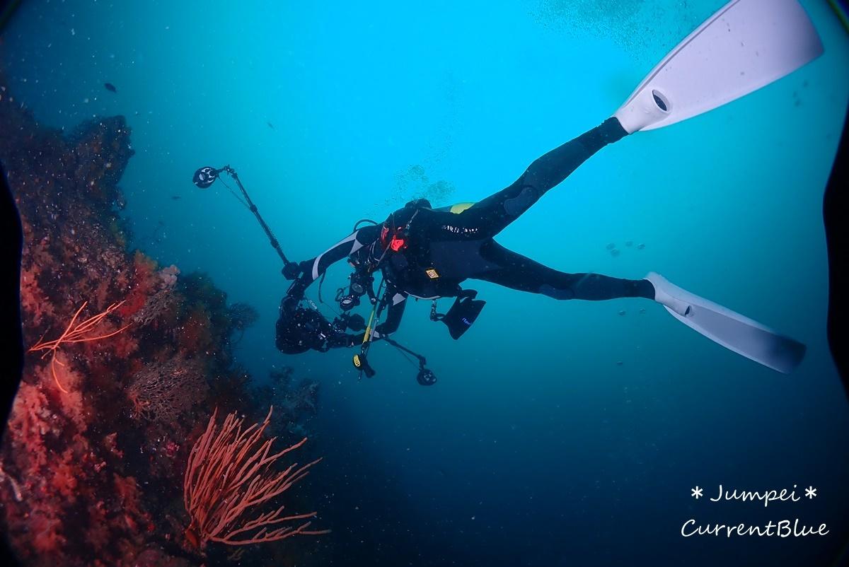 熱海ダイビングおすすめソフトコーラル美しいサクラダイ (50)