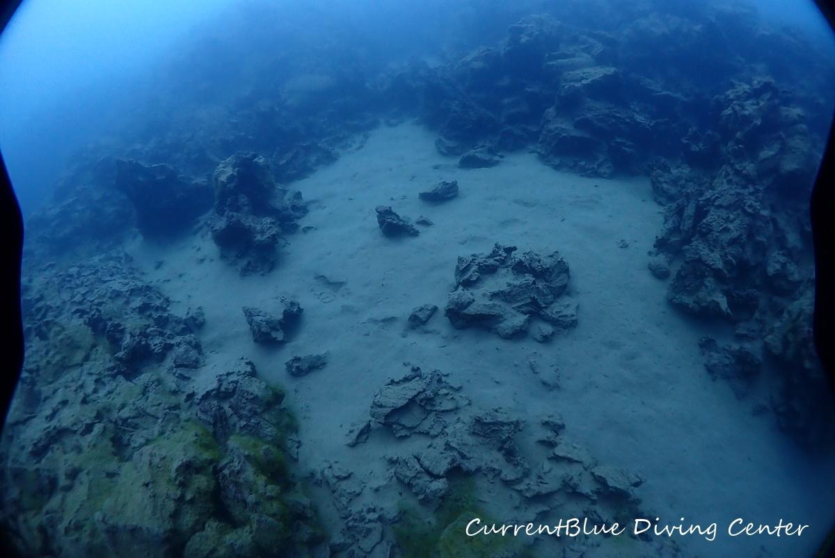 4本栖湖溶岩ダイビング,溶岩流ポイント,本栖湖ダイビング (20)