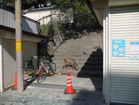 三条通り(3)