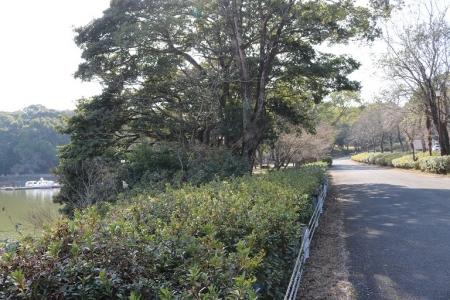 諏訪の池(7)