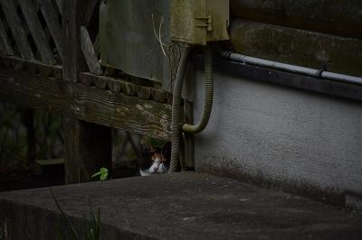 200924黒川ダム (14)