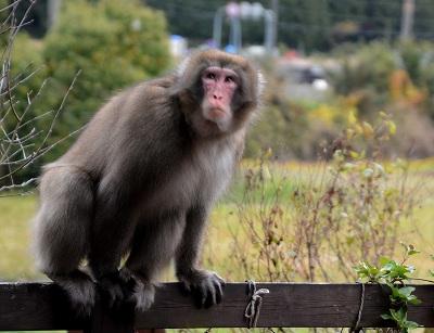 2011011猿 (1)