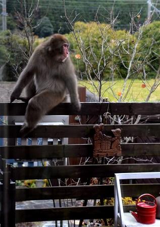 2011011猿 (2)