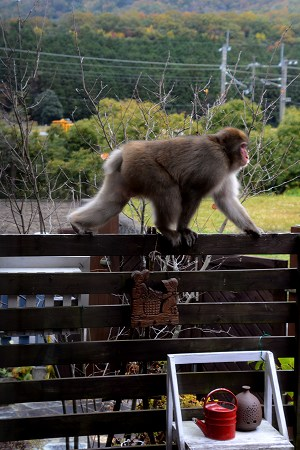 2011011猿 (3)