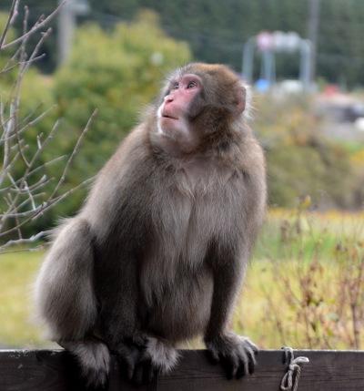 2011011猿 (6)
