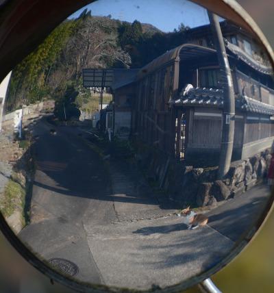 201117稲木 (9)