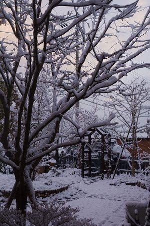 201231大晦日雪 (3)
