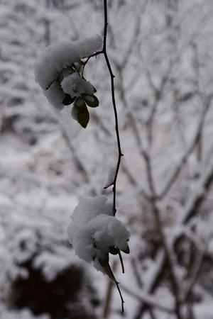 201231大晦日雪 (4)
