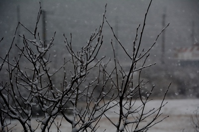 210112雪 (1)