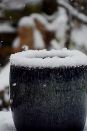 210112雪 (2)