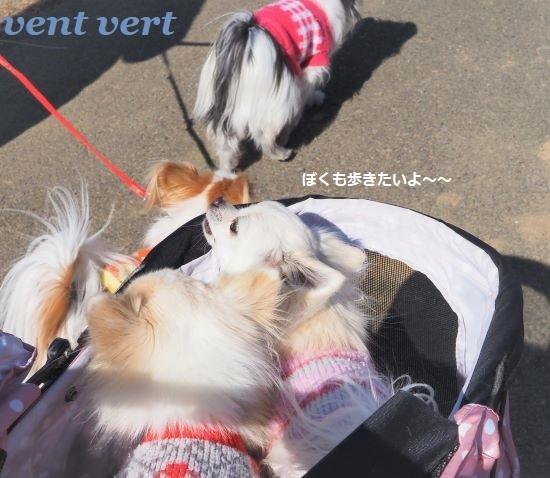 4匹散歩11