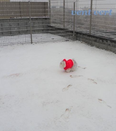 初雪20211