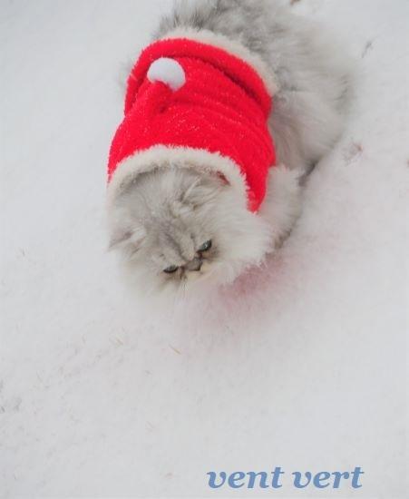 初雪20212