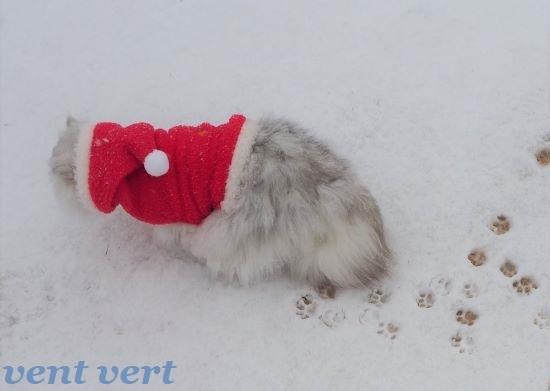 初雪20215