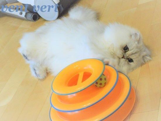 犬猫ブラシ4