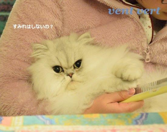 犬猫ブラシ10