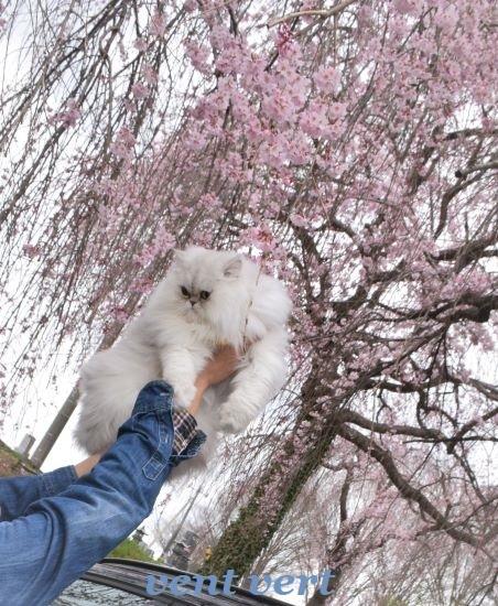 雨のお花見4