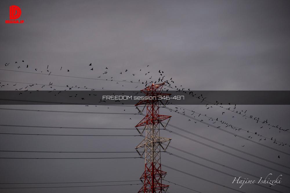 freedom予告『飛び立つカラスの群れ』