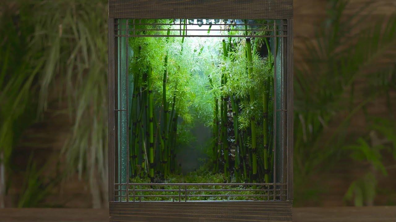 植物男子Asu雨の庭